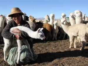 Faire Baby Alpaka Wolle Peru