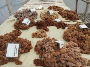 Bio Native Baumwolle Inka Mama Ocllo Peru