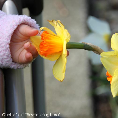 Sicherheit für kleine Kinder: Giftige Frühlingsblumen