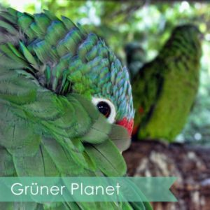 Grüner Planet Blog Mama Ocllo (2)