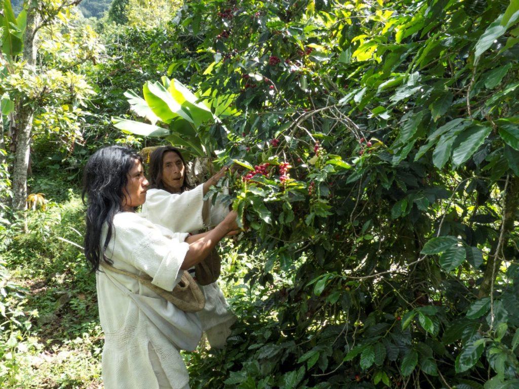 Hochland Kaffee aus KolumbienHochland Kaffee aus Kolumbien (2)