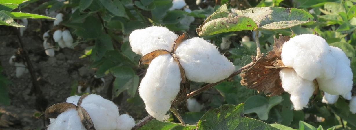 Chill n Feel_Naturprodukte für Babys und Kinder_Peruanische Pima Baumwolle_Biobaumwolle