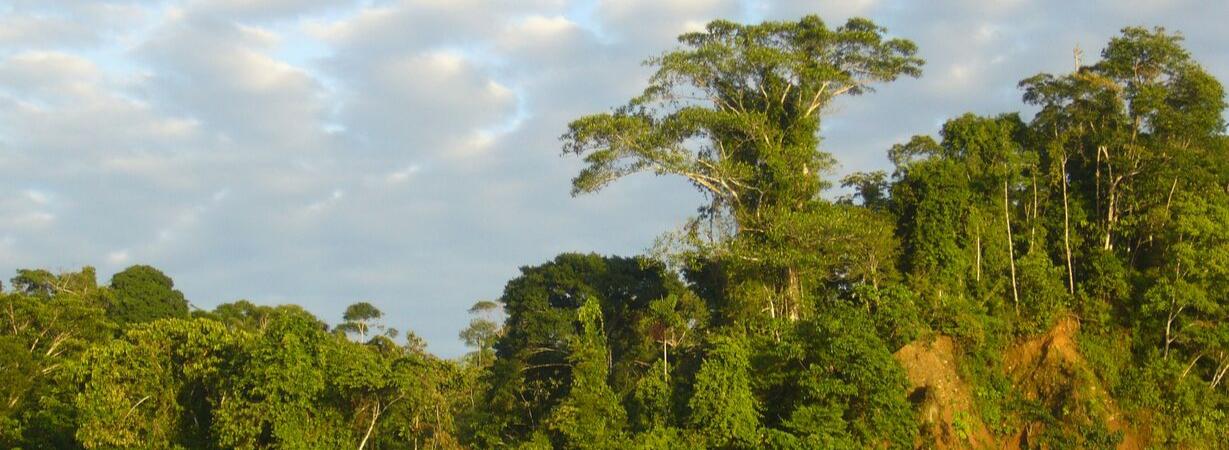 Chill n Feel_Amazonas Regenwald_Puerto Maldonado