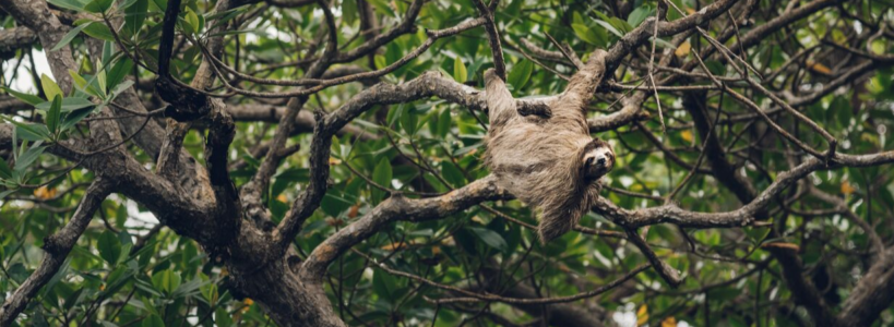 Wir pflanzen Bäume im Amazonas Regenwald
