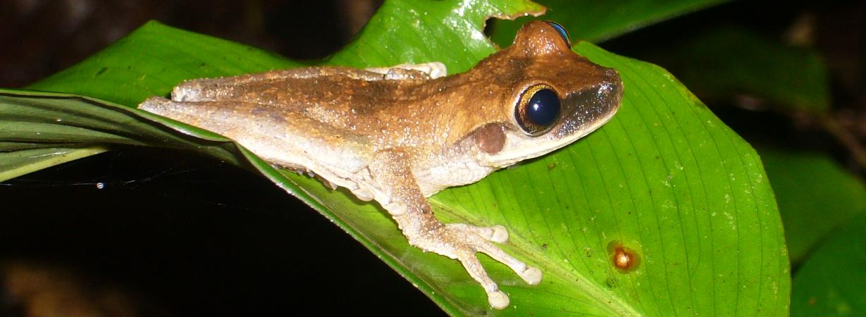 Amazonas Regenwald_Wiederaufforstung_OneTreePlanted_Peru (1)